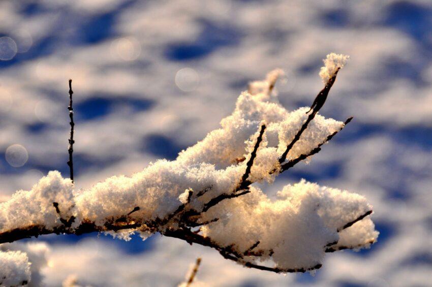 Vintern är en bra tid att hitta inspiration till trädgården